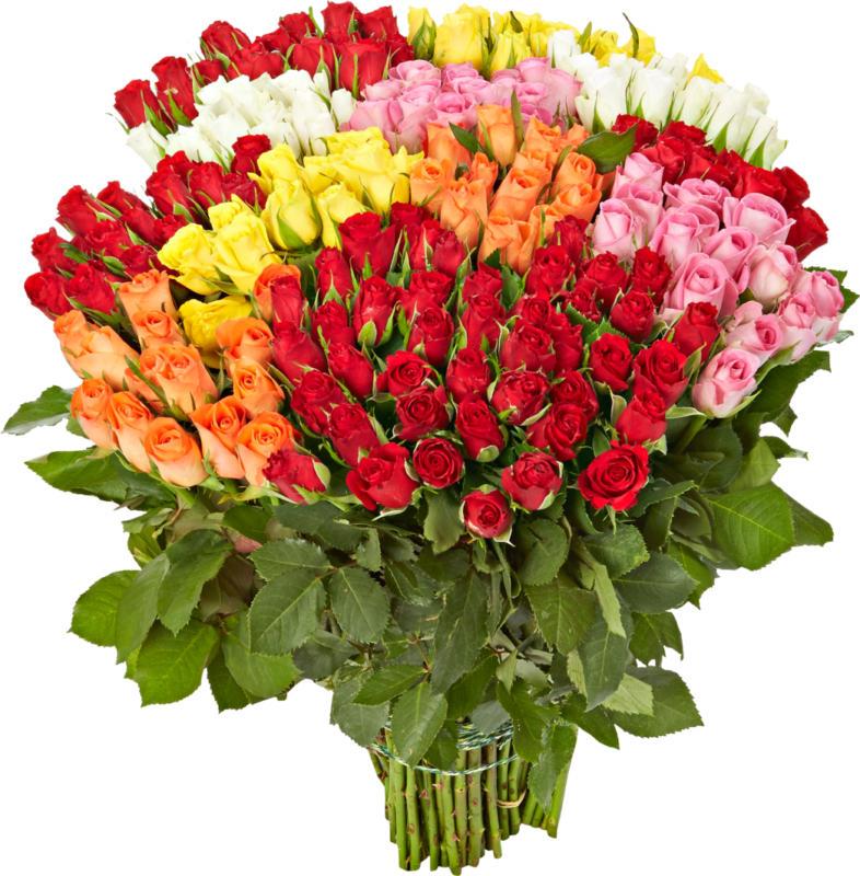 Rose, Mazzo da 14 pezzi, 40 cm