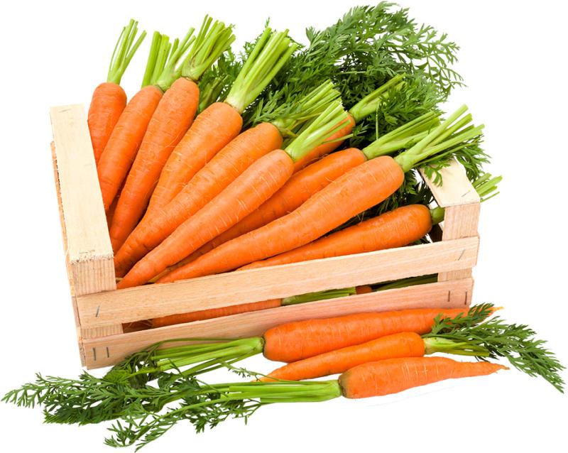 Karotten/Möhren