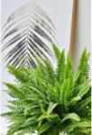 "BayWa Bau- & Gartenmärkte Schwertfarn ""Green Lady"" 30-40 cm"