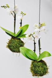 """Moosball """"weiße Orchidee"""""""