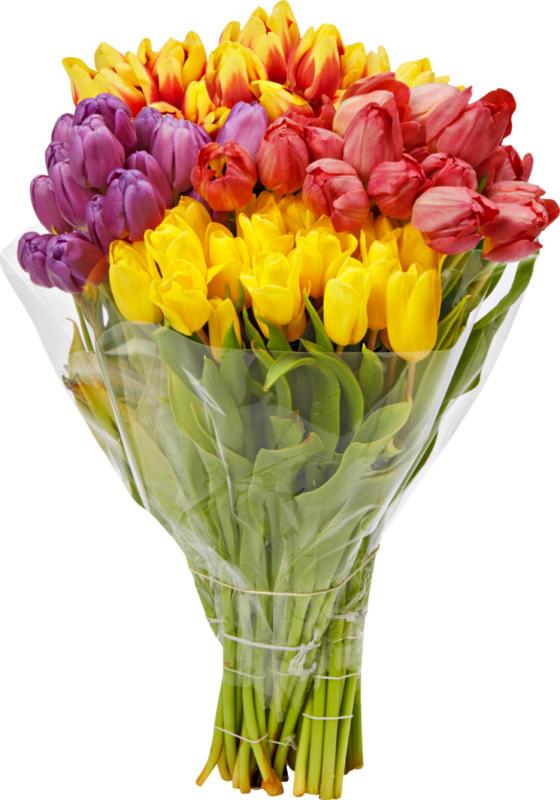 Tulipes, Pays-Bas, botte de 20 pièces