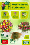 Pflanzen-Kölle Gartencenter Reservieren & Abholen - bis 03.02.2021