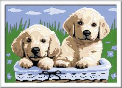 RAVENSBURGER Süße Hundewelpen Malen nach Zahlen