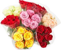 Rose Premium , Mazzo da 5 pezzi, diversi colori, 40 cm