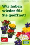 Pflanzen-Kölle Gartencenter Wiedereröffnung Wiesbaden - bis 10.02.2021