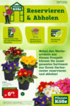 Pflanzen-Kölle Gartencenter Reservieren & Abholen - bis 10.02.2021