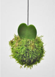 "Moosball ""Herzblatt-Pflanze"""