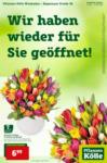 Pflanzen-Kölle Gartencenter Pflanzen-Kölle: Wir haben wieder für Sie geöffnet in Wiesbaden! - bis 17.02.2021