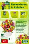 Pflanzen-Kölle Gartencenter Pflanzen-Kölle: Reservieren & Abholen - bis 17.02.2021