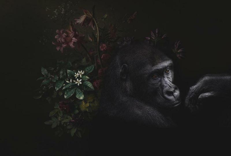 Fototapete Gorilla Trend Schwarz