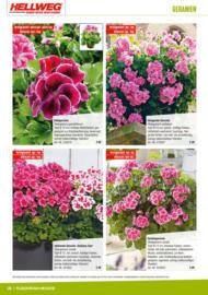 günstig pflanzen kaufen